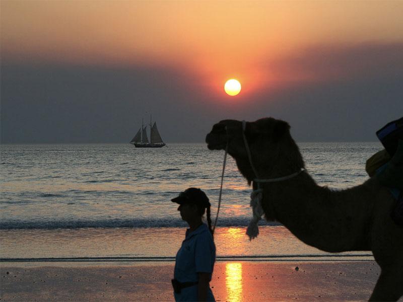 Willie sunset camel