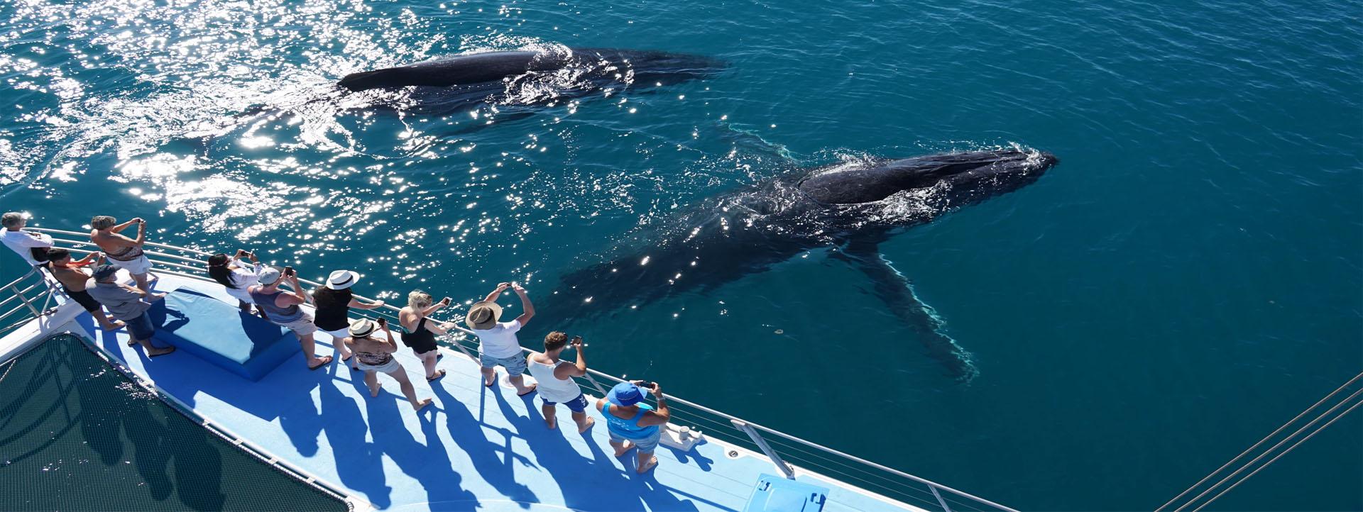KARMA IV whale watching Broome