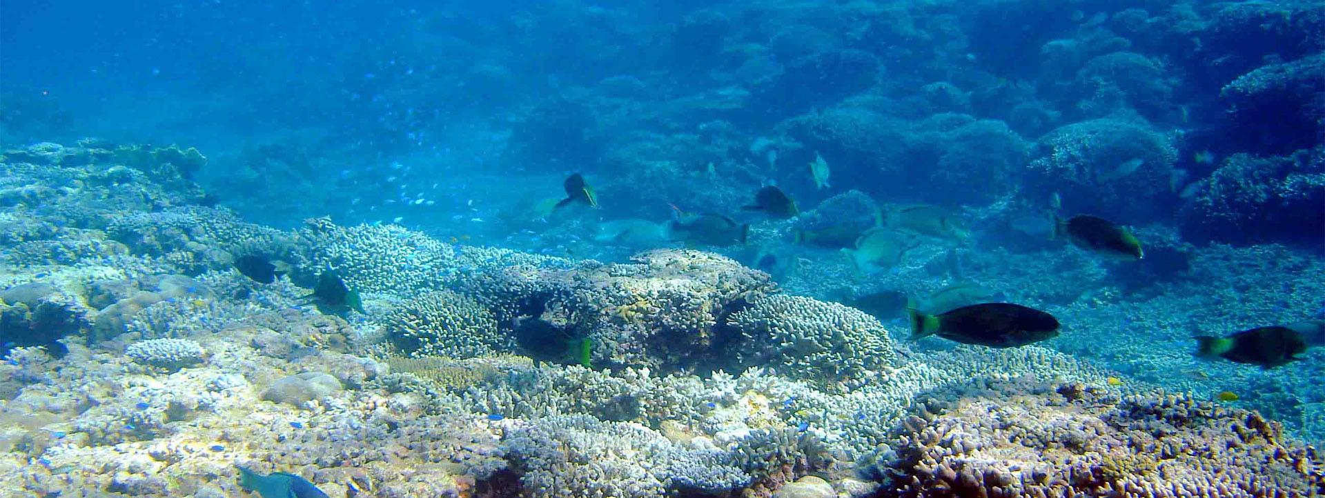 ROWLEY SHOALS Oceaneer trip