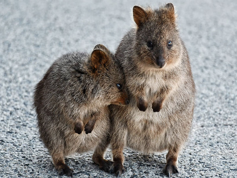 TROPIC ROVER sailing tours Perth WA Fremantle quokkas