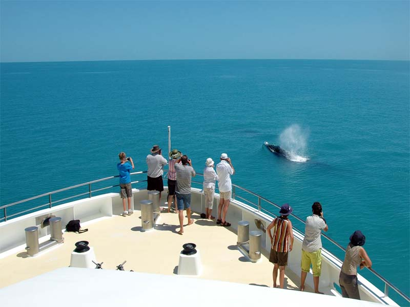 CORAL ADVENTURER Kimberley cruise whale watching