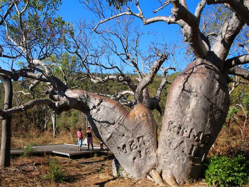 KIMBERLEY-QUEST-Parker-King-tree