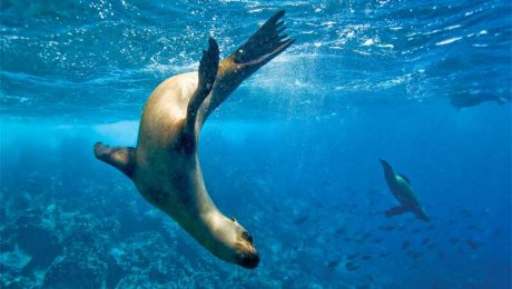 GALAPAGOS ISLANDS BOAT CRUISES WEBSITE LAUNCHED